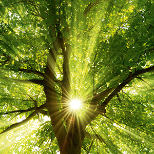 Unser Rohstoff Holz